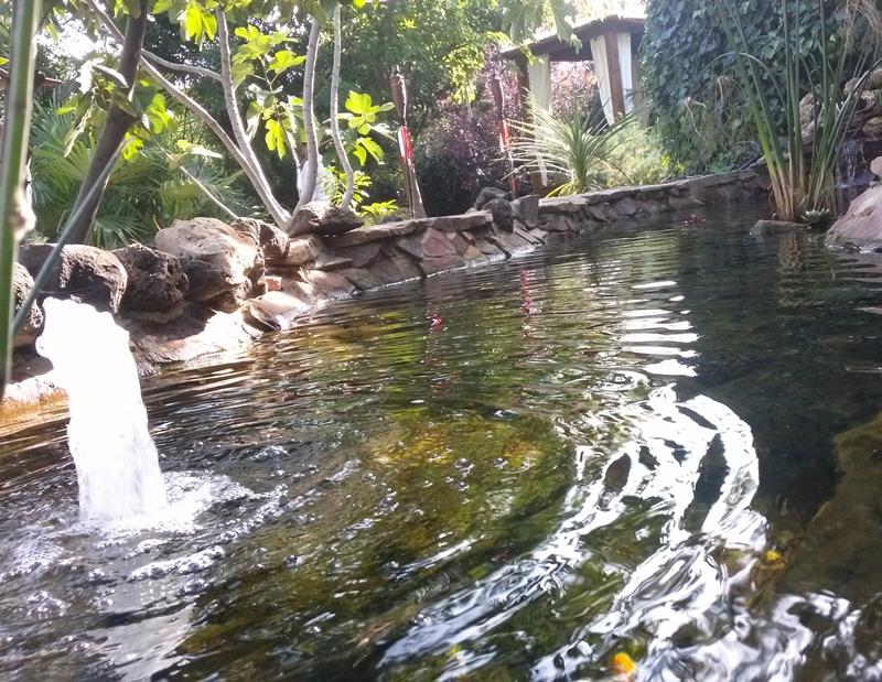 construimos estanques con filtros biolgicos propios que garantizan la ausencia de lodos y el agua cristalina y sin olores de por vida