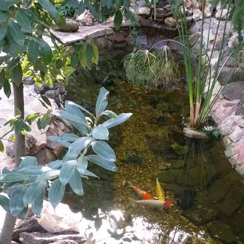 estanque para kois