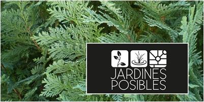 Jardinería - Diseño de jardines - Estanques en Cercedilla