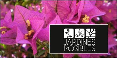 Jardinería - Diseño de jardines - Estanques en San Sebastián de los Reyes