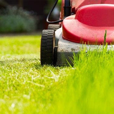 Mantenimiento de jardines a particulares