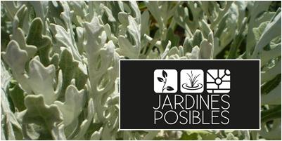 Mantenimiento de jardines en Hoyo de Manzanares