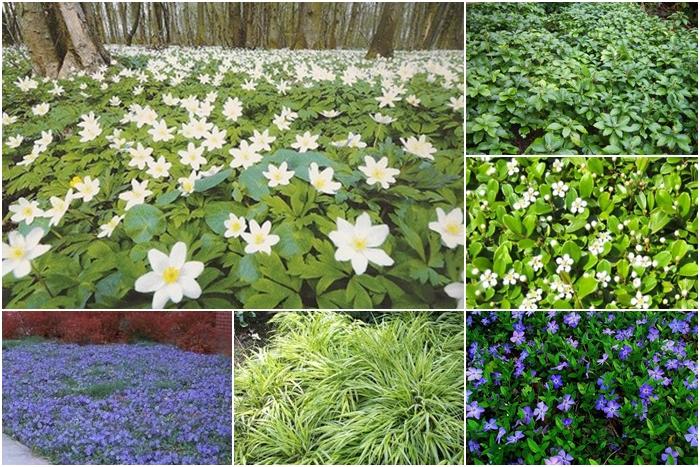 Reducir gasto de agua en el jardín con tapizantes