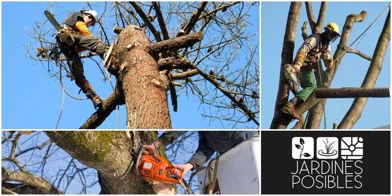 Poda, Tala y corte de árboles en Cerceda