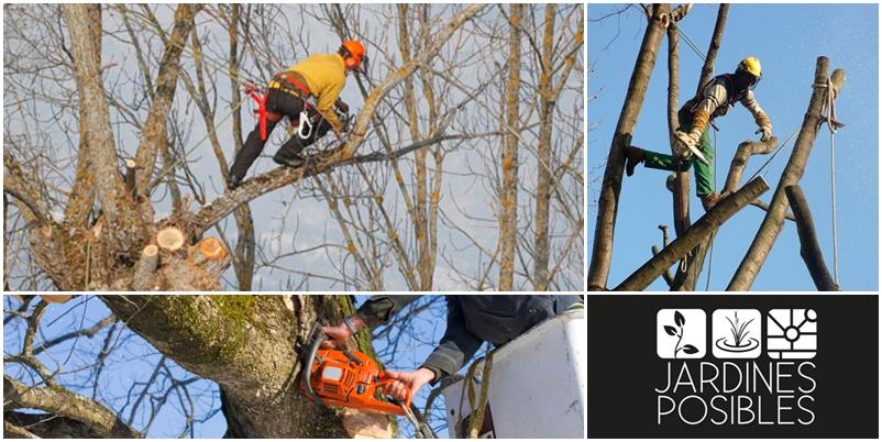 Poda, Tala y corte de árboles en Collado Mediano
