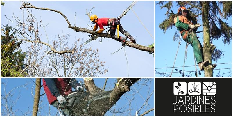 Poda y tala de árboles en Zarzalejo