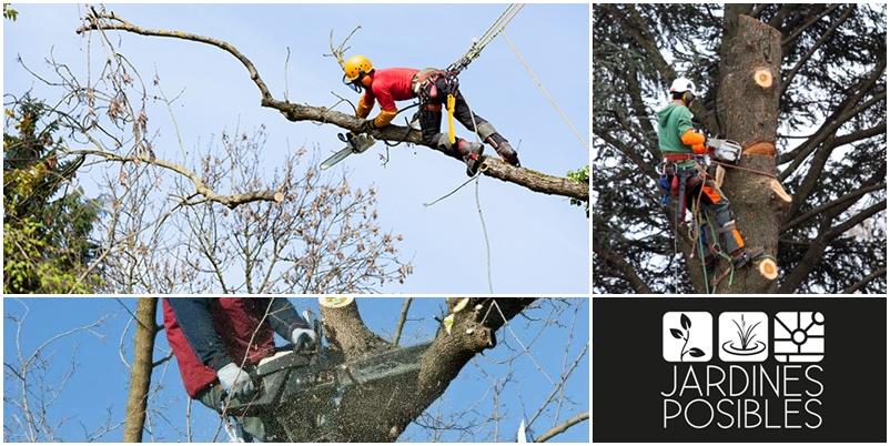 Poda, Tala y corte de árboles en Mataelpino