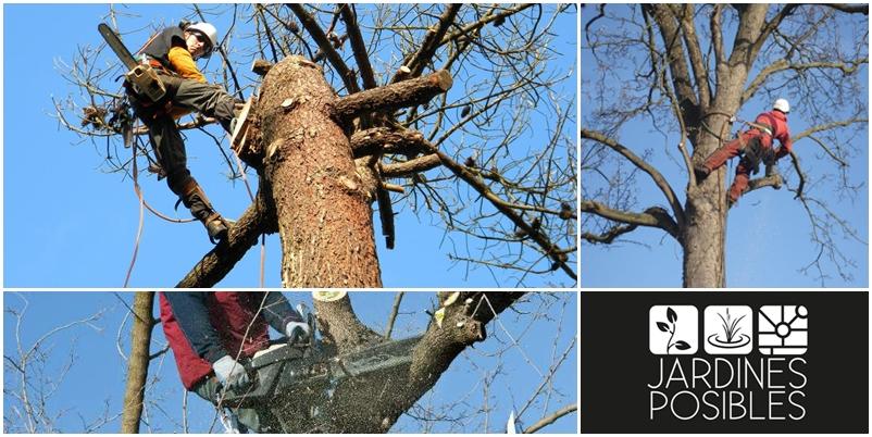 Poda, Tala y corte de árboles en Soto del Real